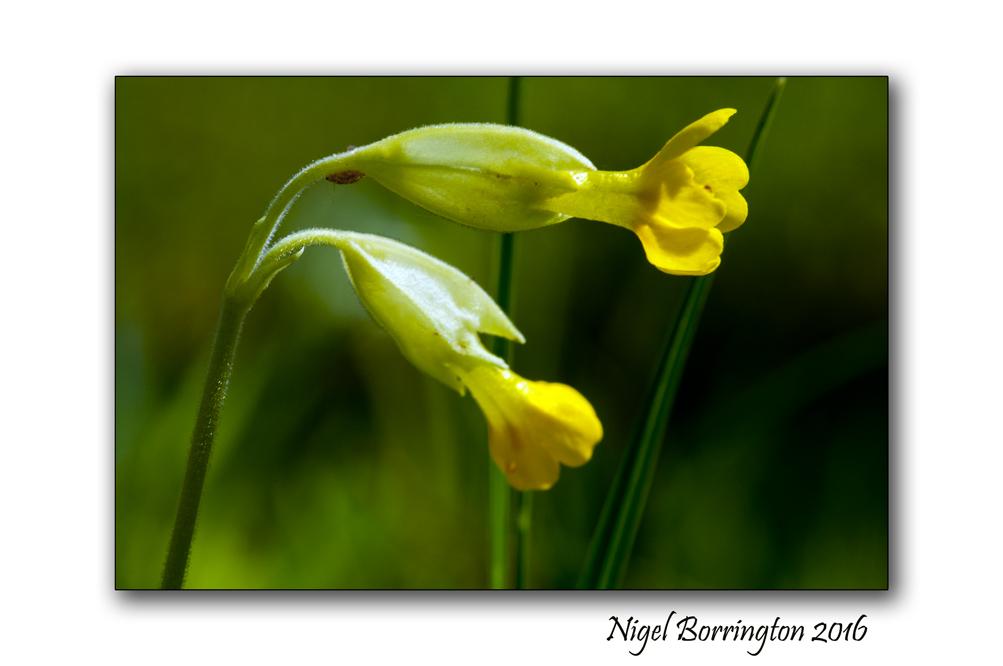 Kilkenny wildlife photography springtime in the woods nigel borrington 03