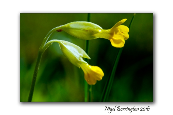 Kilkenny wildlife photography springtime in the woods nigel borrington 03