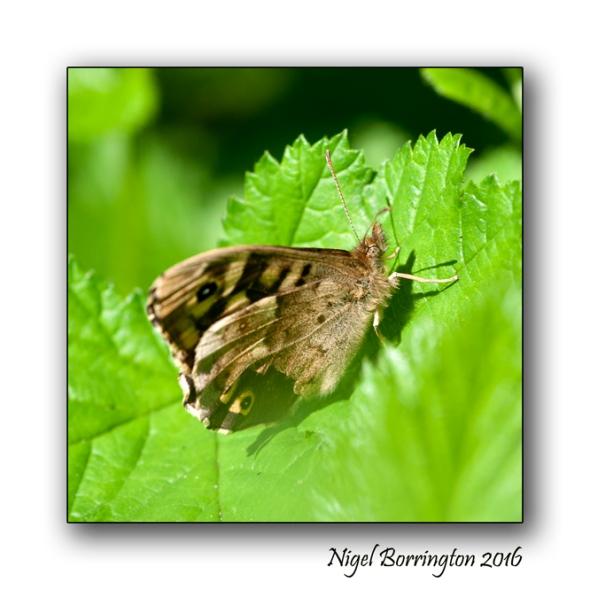 Life of a insect Nigel borrington 03