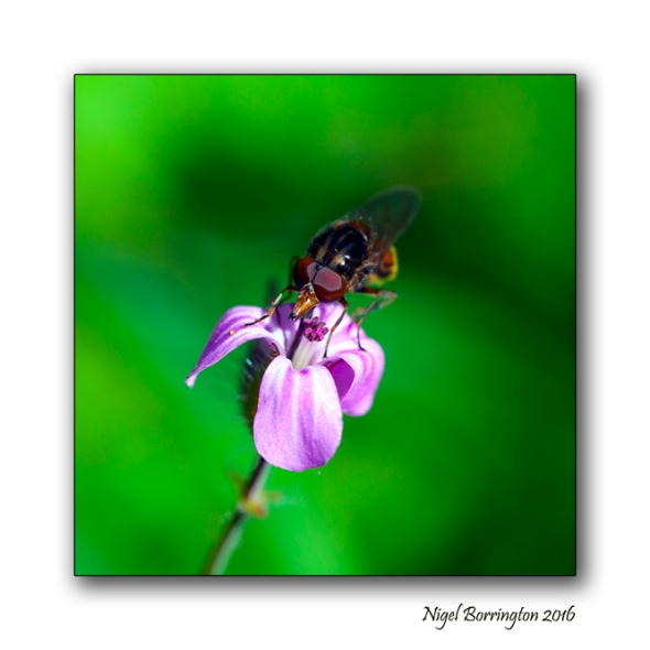 Life of a insect Nigel borrington 06