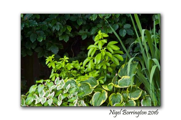 In the Silence of it All Nigel Borrington 04