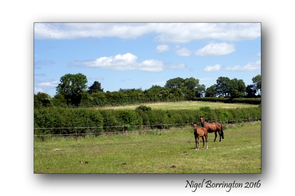 mother and foal Nigel Borrington 01