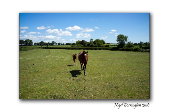 mother and foal Nigel Borrington 02