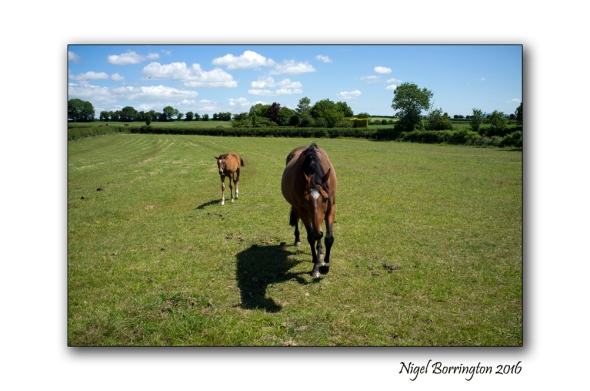 Dreams of foal  Nigel Borrington