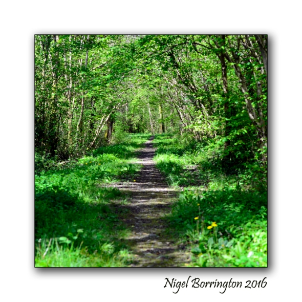The Nightingales Nest Irish Landscape photography Nigel Borrington 01