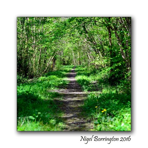 The Nightingales Nest Irish Landscape photography Nigel Borrington 01