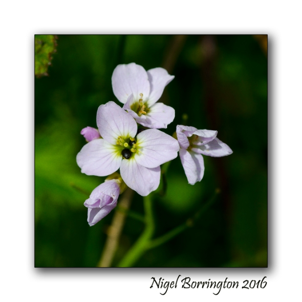 The Nightingales Nest Irish Landscape photography Nigel Borrington 02