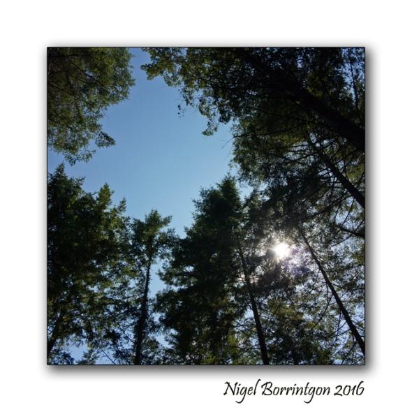 The Nightingales Nest Irish Landscape Photography Nigel Borrington
