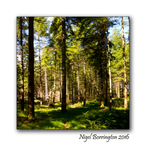 The Nightingales Nest Irish Landscape photography Nigel Borrington 04