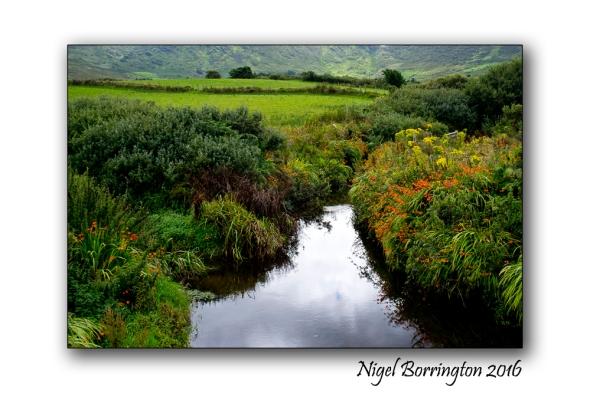 Common Name: Montbretia Scientific Name: Crocosmia x crocosmiiflora Irish Name: Fealeastram dearg