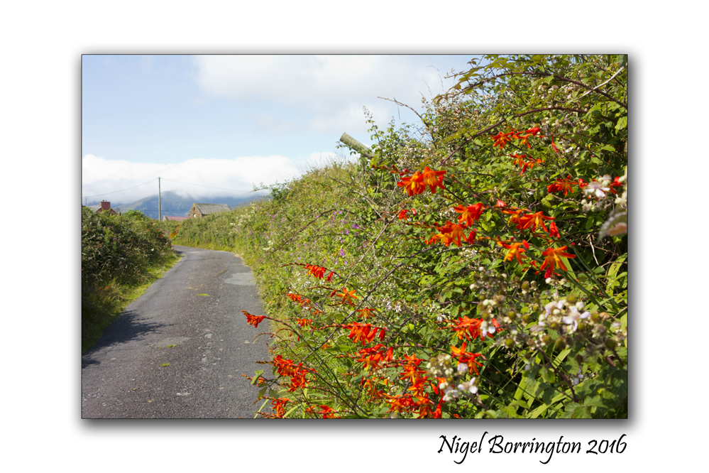 The Path to the beach county Kerry 4
