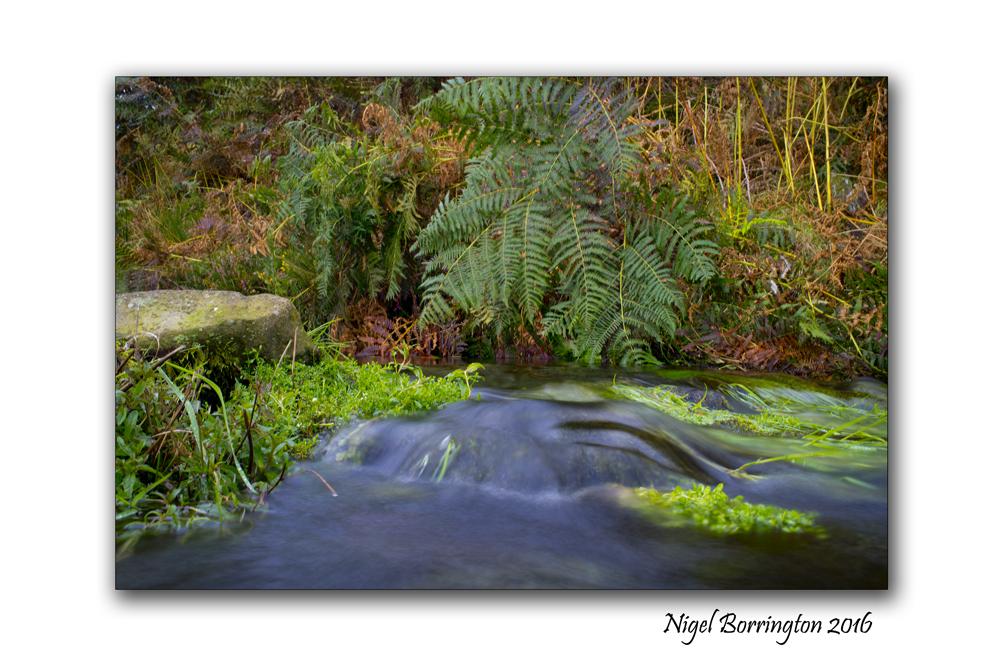 flow-from-a-spring-on-the-mountain-of-slievenamon-nigel-borrington-02