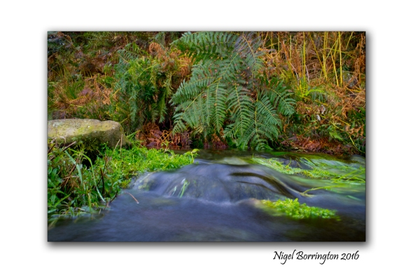 flow-from-a-spring-on-the-mountain-of-slievenamon-nigel-borrington-02