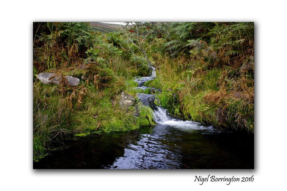 flow-from-a-spring-on-the-mountain-of-slievenamon-nigel-borrington-03