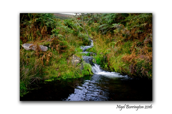 flow-from-a-spring-on-the-mountain-of-slievenamon-nigel-borrington-03