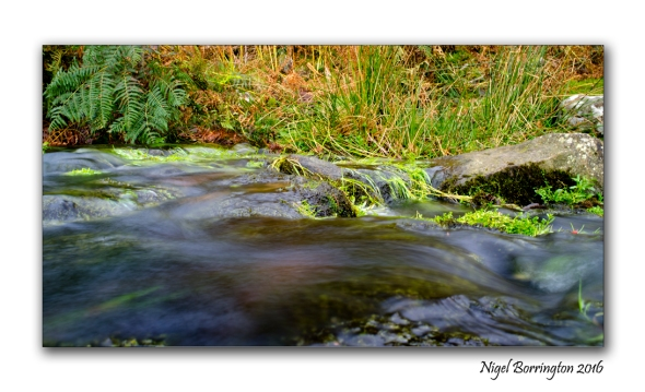 flow-from-a-spring-on-the-mountain-of-slievenamon-nigel-borrington-05