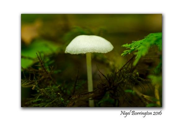 fungi-in-the-september-woodlands-nigel-borrington-2