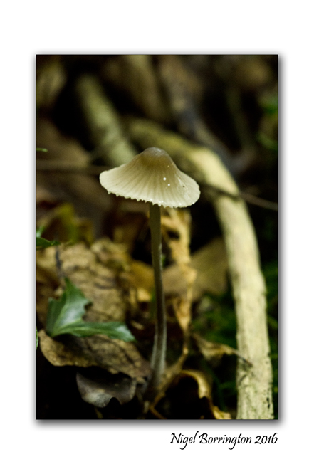 fungi-in-the-september-woodlands-nigel-borrington-3