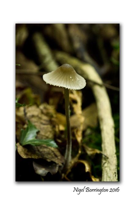 fungi-in-the-september-woodlands-nigel-borrington-3