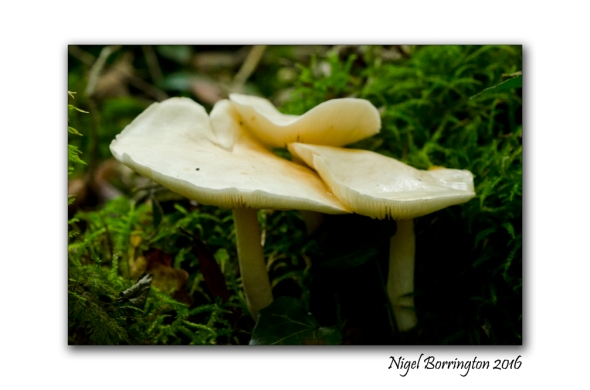 fungi-in-the-september-woodlands-nigel-borrington-4