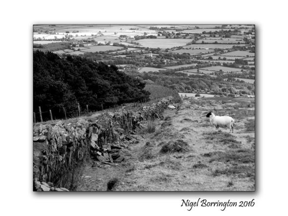 The Forest Wall Sleivenamon County Tipperary Nigel Borrington 2