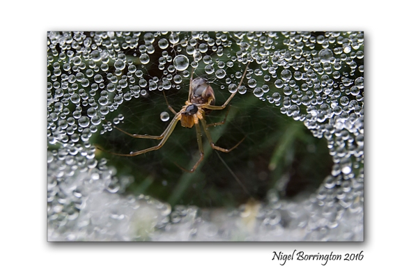 Wildlife and Nature images Spider in her web Nigel Borrington