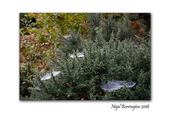 a-spider-on-slievenamon-nigel-borrington-2