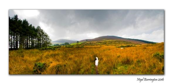 Irish Landscape Photography Slievenamon Bog Nigel Borrington