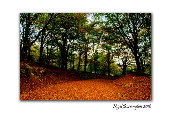 irish-landscape-images-garryduff-county-kilkenny-03-nigel-borrington