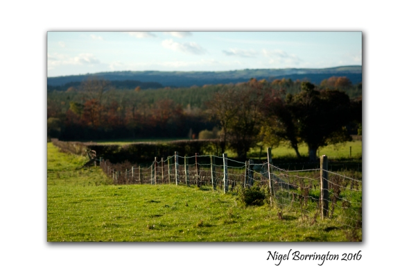 Kilkenny Landscapes Over the Fence Nigel Borrington