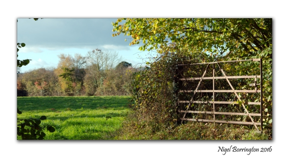 Kilkenny Landscape photography Beyond the gate Nigel Borrington