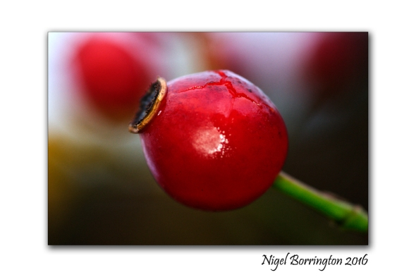 kilkenny-landscapes-macro-photography-rosehip-nigel-borrington-01