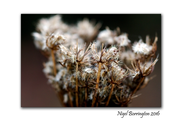 kilkenny-landscapes-macro-photography-seed-head-nigel-borrington-01
