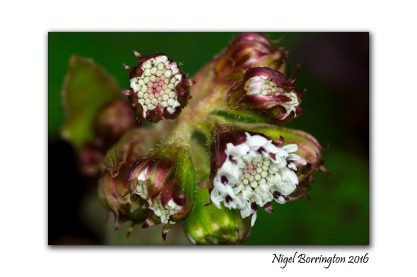 kilkenny-landscapes-macro-photography-seed-heads-nigel-borrington-03
