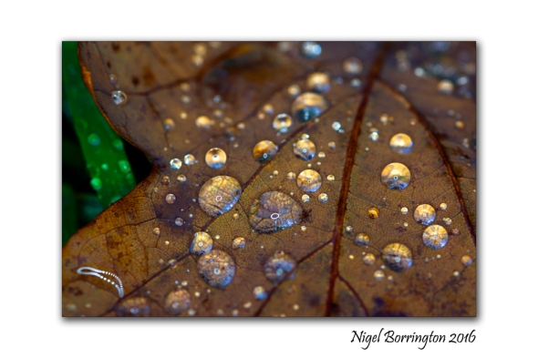 November rain Nigel Borrington