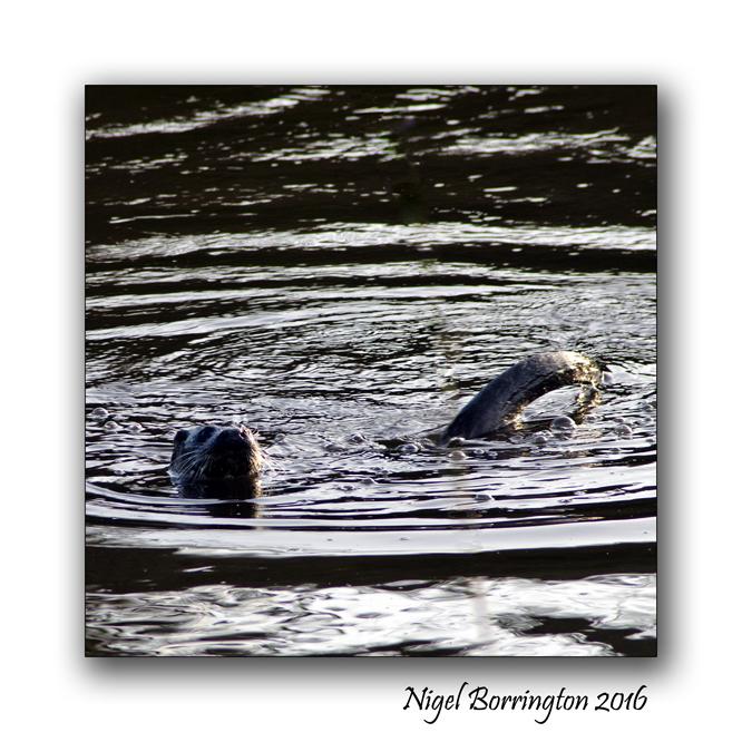 irish-wildlife-wekeend-nigel-borrington-02