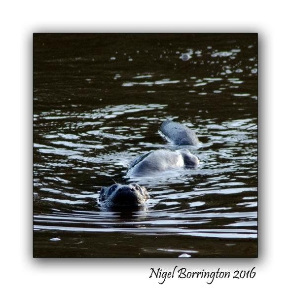 irish-wildlife-wekeend-nigel-borrington-03