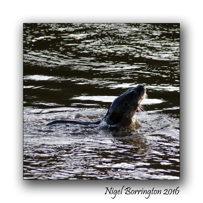 irish-wildlife-wekeend-nigel-borrington-04