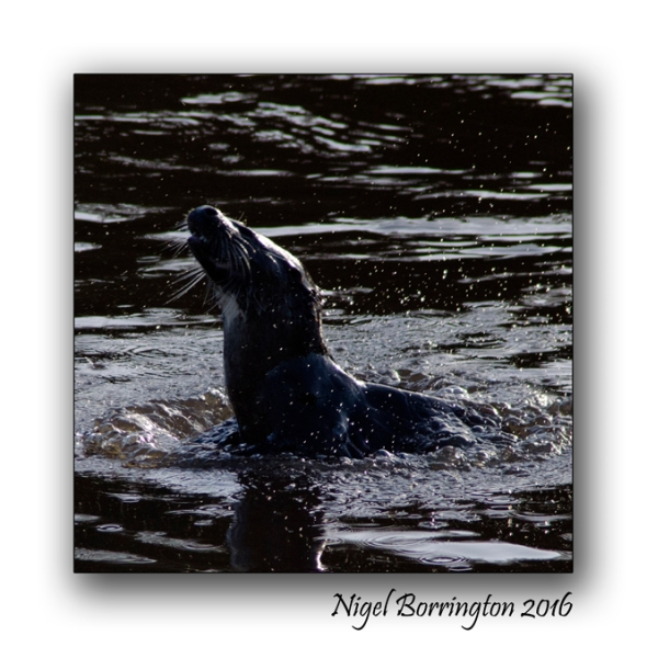 irish-wildlife-wekeend-nigel-borrington-05