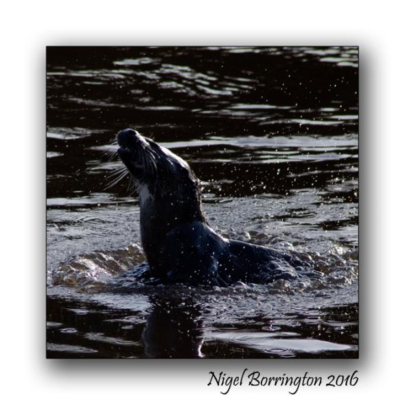 irish-wildlife-wekeend-nigel-borrington-05