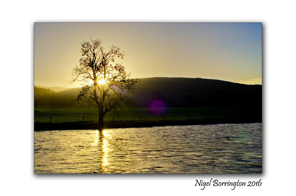 The tree sings to the river Irish landscapes Nigel Borrington