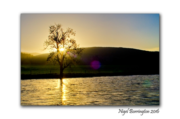 The tree sings to the river Irish landscapes Nigel Borrington