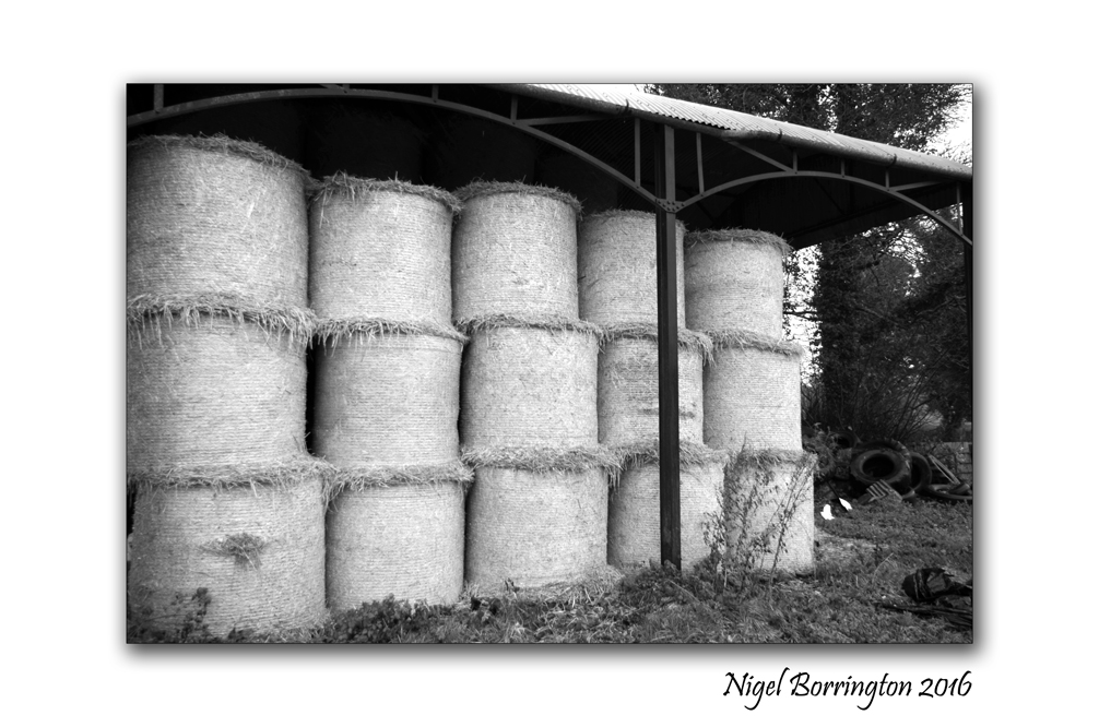 WinterFeed in the barn County Kilkenny Nigel Borrington