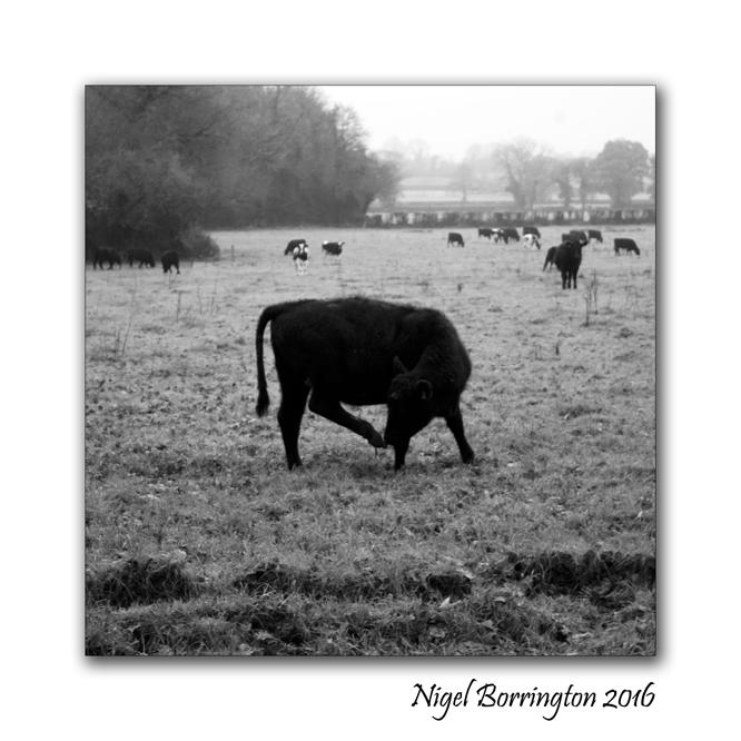 winters-day-on-the-farm-165-nigel-borrington