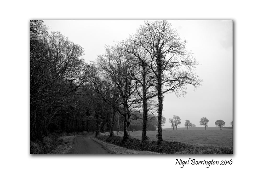 winters-day-on-the-farm-166-nigel-borrington