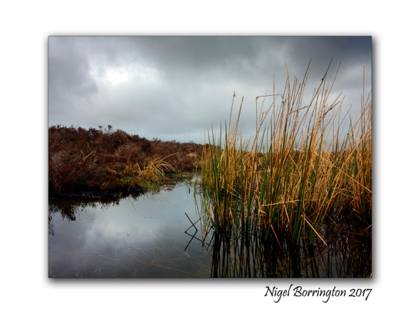 Bogland - Poem by Seamus Heaney Image - Nigel Borrington
