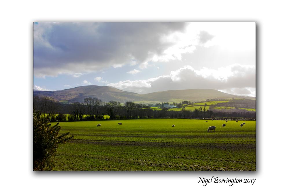 On the Farm Irish landscapes Nigel Borrington