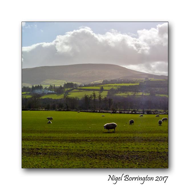irish-farms-county-carlow-nigel-borrington-02