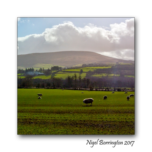 irish-farms-county-carlow-nigel-borrington-02