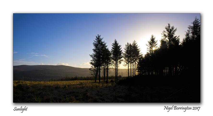 Landscape in Sunlight  Nigel Borrington